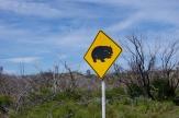 Beware of wombats!