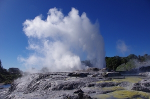 Geyser in Maori land, NZ
