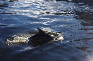 Dooooolphins!!